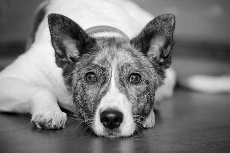 Dog portrait Stock Photo - 13146511