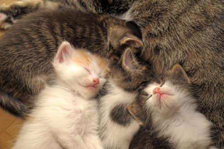 kitten sleeping next to a cat Stock Photo