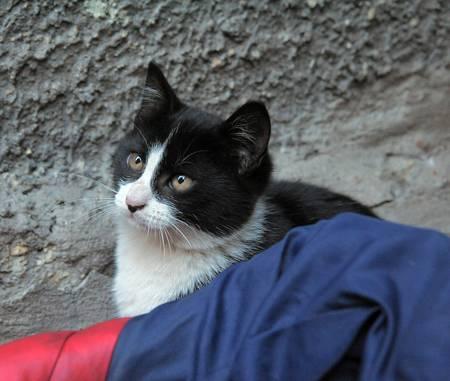 homeless  cat Stock Photo - 13247874