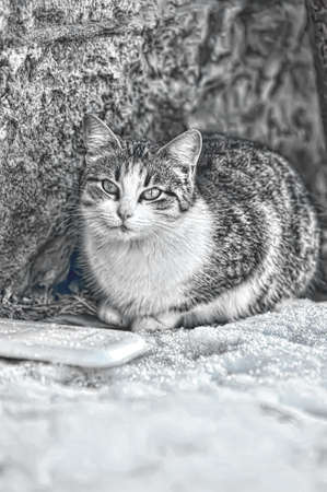 cat in the snow photo