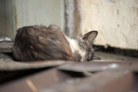 Another portrait of the miss fortune homeless animal Stock Photo - 13443982