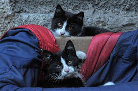 homeless  cats Stock Photo - 13444028