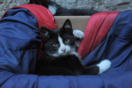homeless  cat Stock Photo - 13444223