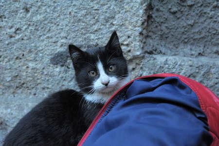 homeless  cat Stock Photo - 13444421
