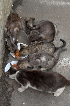 alley cats eat Stock Photo - 13444396