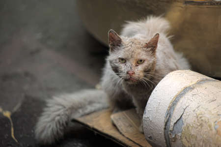 rueful:  homeless cat , on empty street wait for better days