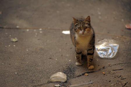 piteous: homeless  cat
