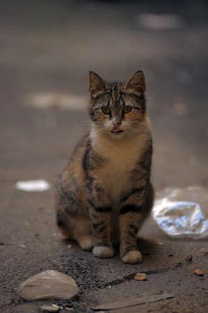 homeless  cat Stock Photo - 13444180