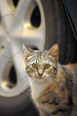 distressful: homeless  cat