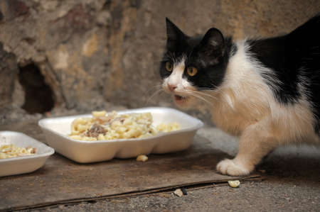 distressing: Another portrait of the miss fortune homeless animal