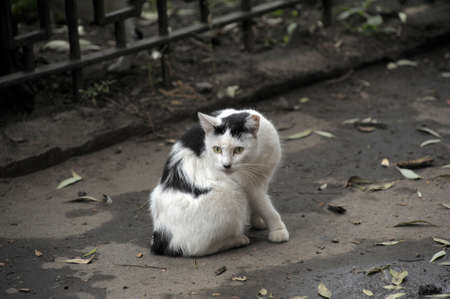 Homeless cat  photo