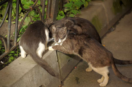 Homeless cats eat photo