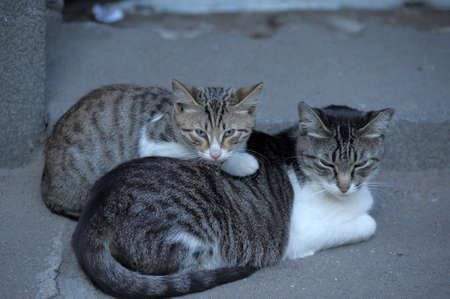 Homeless cats Stock Photo - 13453235