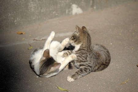Homeless cats  Stock Photo - 13453232