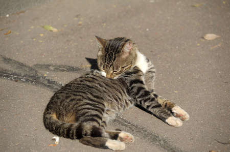 Homeless cat Stock Photo - 13453236