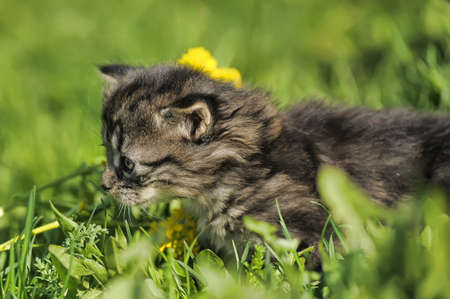 Small kitten in the grass Stock Photo - 13552100
