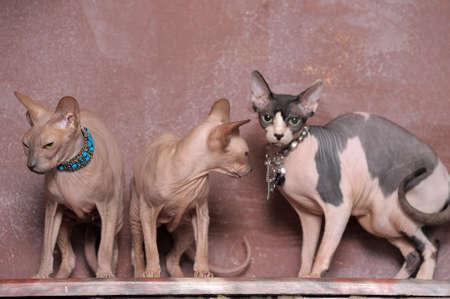 three sphinxes Stock Photo - 13678637