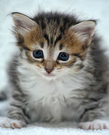 charming little kitten photo
