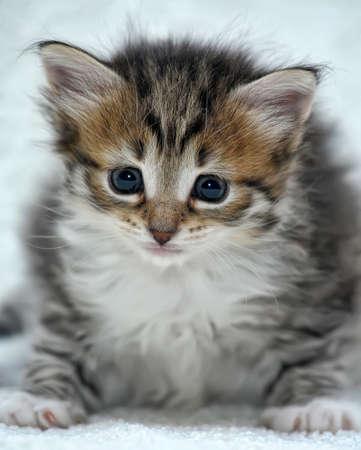 charming little kitten Stock Photo - 13754092