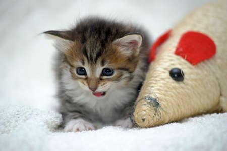 cute kitten Stock Photo - 13747602