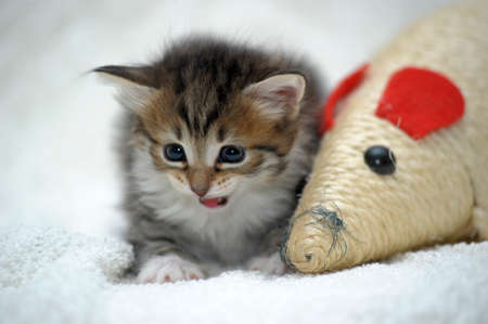 cute kitten Stock Photo - 13747602