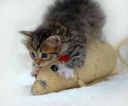 small cute kitten  photo