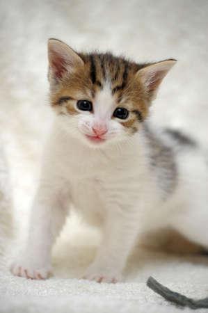 small cute kitten  Stock Photo - 13754117