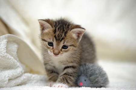 small cute kitten  photo