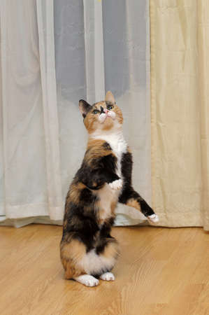 cat is standing on its hind legs photo