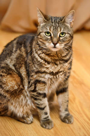 Cat in house Stock Photo - 13755566