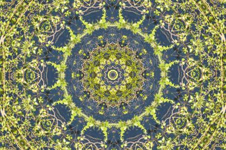 green ornament template Stock Photo - 13813346