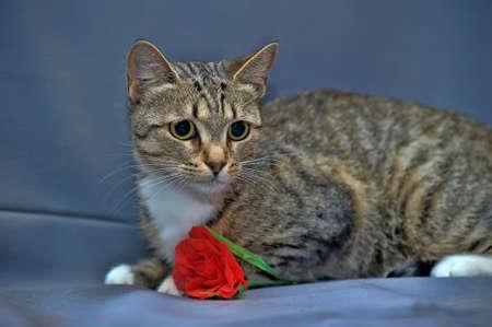 European tiger cat photo