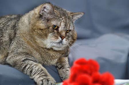 traumatized: old cat Stock Photo
