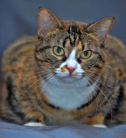 sleek domestic cat photo