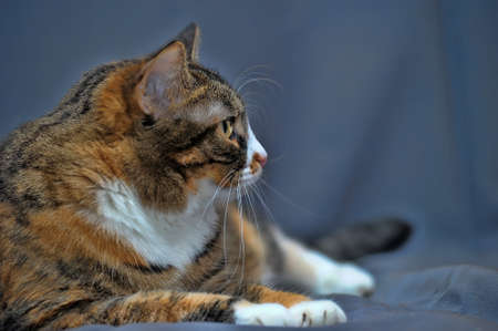 sleek: sleek domestic cat Stock Photo