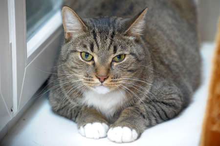ilness: large striped cat