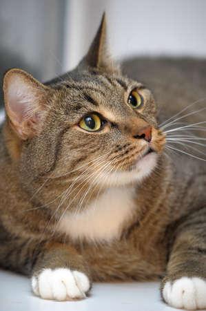 large striped cat Stock Photo - 13813234