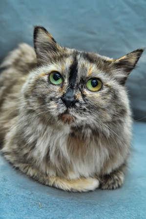 very beautiful gray  cat photo