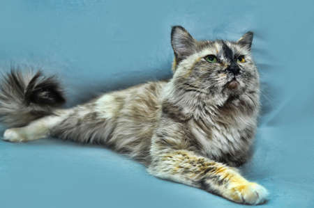 very beautiful gray  cat photo