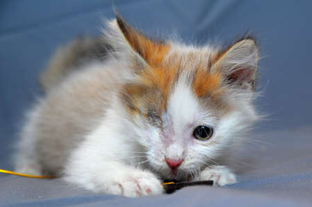 one-eyed kitten rescued by zoodefenders photo