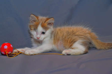 one-eyed kitten rescued by zoodefenders Stock Photo - 13837958