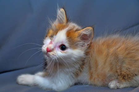 one-eyed kitten rescued by zoodefenders Stock Photo - 13837961