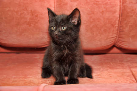 black kitten on the couch Stock Photo - 14329796