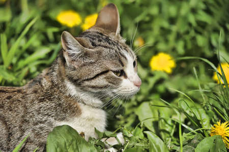 Cat in the grass Stock Photo - 13910369