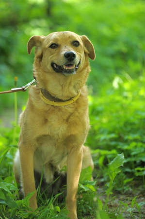 red dog on a green background Stock Photo - 13910359