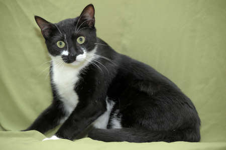black and white green-eyed cat photo