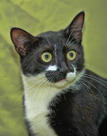 blanco y negro de ojos verdes de gato Foto de archivo - 13910004