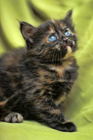 charming half-month kitten Stock Photo - 13909790