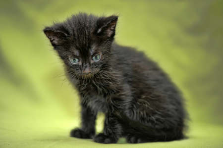 black kitten on a green background Stock Photo - 13910462