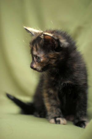 charming half-month kitten photo